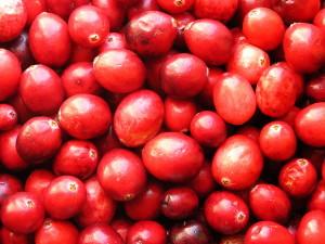 Cranberry – gut für die Blasengesundheit