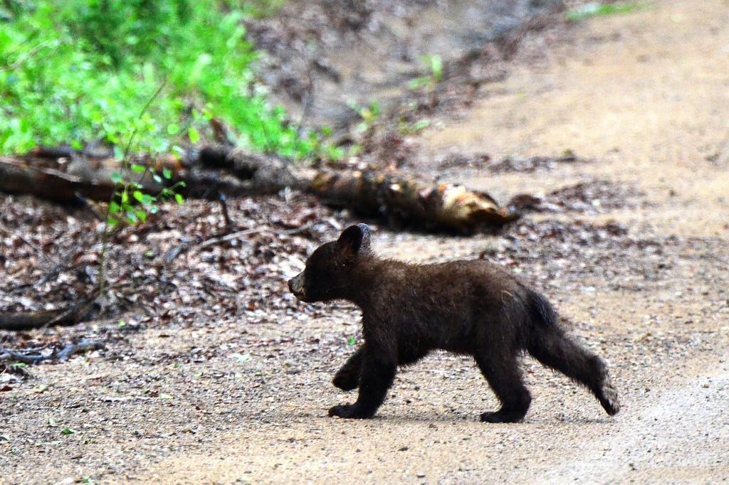 Der Bär – ein zauberhafter Film für die ganze Familie