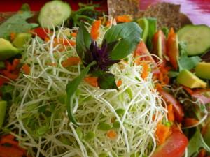 Rohkost – die lebendige Nahrung